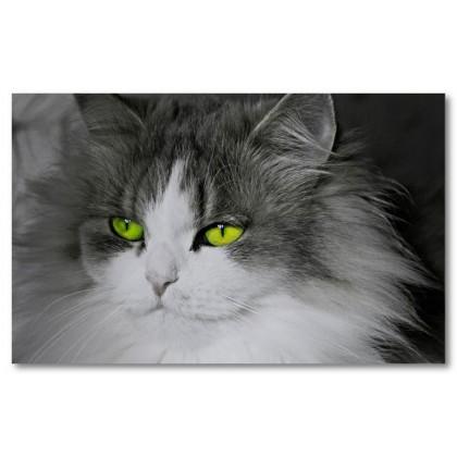Αφίσα (πράσινος, μάτια, γάτα)